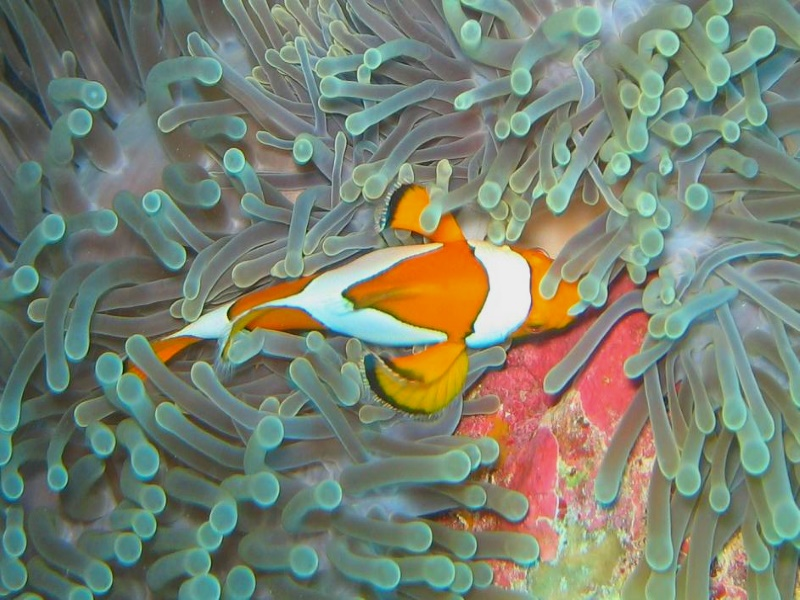 23_Nemo